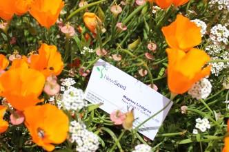 newseed visitkort blommor